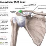 AC Joint