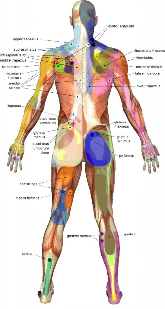 Trigger-Point-Massage-Therapy-Back-Body-Guide