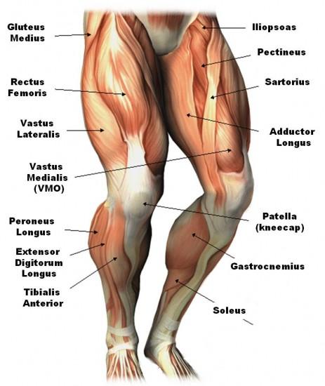 Leg front