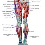 Hamstring Pain Injuries