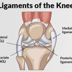Massage for MCl, ACL, LCL, PCL knee injuries, sprains